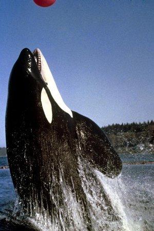 Namu, the Killer Whale